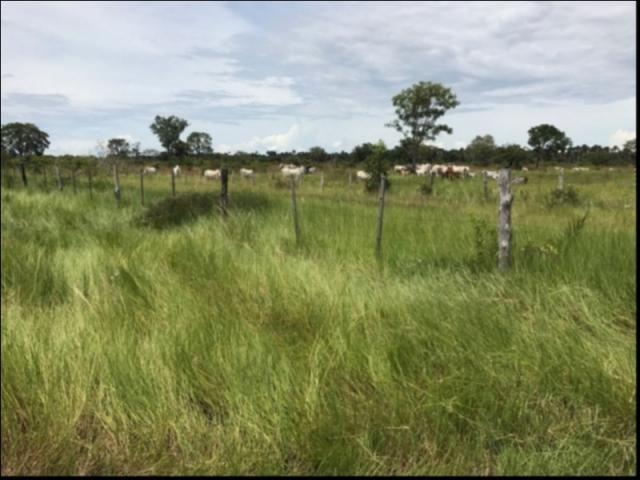Fazenda no Fazenda em Santo Antonio do Leverger - Foto 3