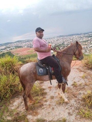 Cavalo marcha picada - Foto 6