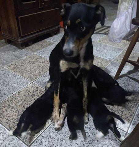 Bebês caninos para adoção - Foto 2