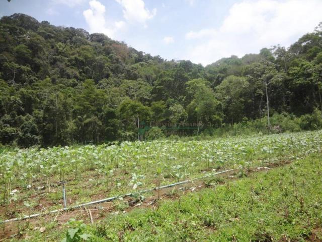 Sitio com 780.000 m² por R$ 1.150.000 - Ponte Nova - Teresópolis/RJ - Foto 13