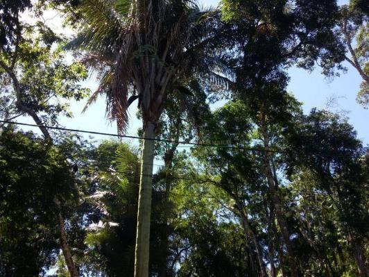 Terreno residencial à venda, Vargem Grande, Teresópolis. - Foto 3
