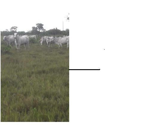 40ha. 10km de Cuiabá mt -pastagens cercados, casa, poço semi-artesiano - Foto 4