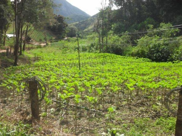 Sítio rural à venda, Venda Nova, Teresópolis. - Foto 13