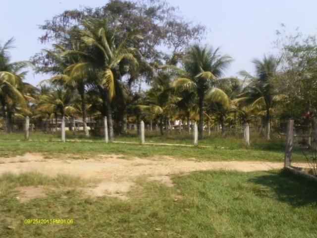 Linda fazenda com nascente própria em Jaconé, Maricá - Foto 17