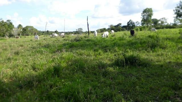 Fazenda com 150 hectares - Região da Soja (Balsas-MA) - Foto 2