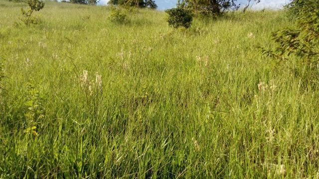Fazenda em Baixo Guandu ES -Barato (entr +parc. anuais) - Foto 6