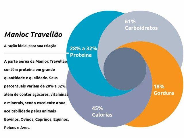 RAÇÃO DE ENGORDA PROTEÍNA 32% NO PRECINHO - Foto 5