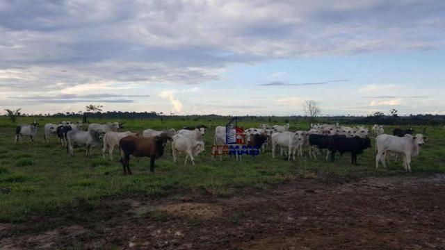 Fazenda Localizada na cidade de Buritis-RO - Foto 15