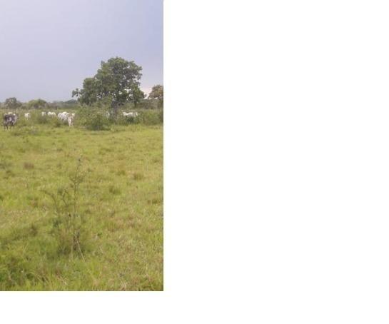 40ha. 10km de Cuiabá mt -pastagens cercados, casa, poço semi-artesiano - Foto 2