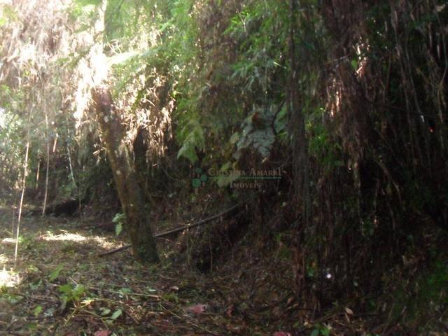 Terreno residencial à venda, Vargem Grande, Teresópolis. - Foto 9
