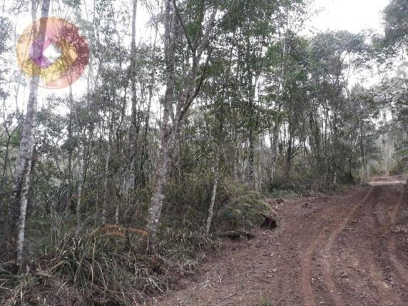 Chácara  à venda, 23000 m² por R$ 180.000 - Palmerinha - Campina Grande do Sul/PR - Foto 3