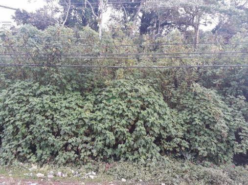 Terreno residencial à venda, Granja Guarani, Teresópolis. - Foto 2