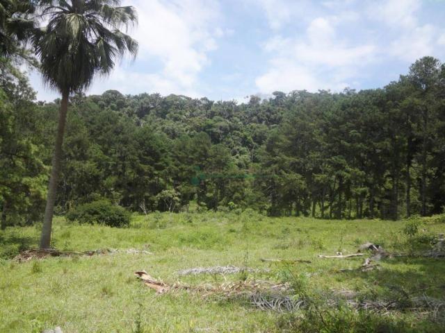 Sitio com 780.000 m² por R$ 1.150.000 - Ponte Nova - Teresópolis/RJ - Foto 11