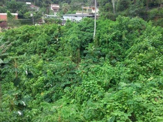Terreno residencial à venda, Parque do Ingá, Teresópolis.