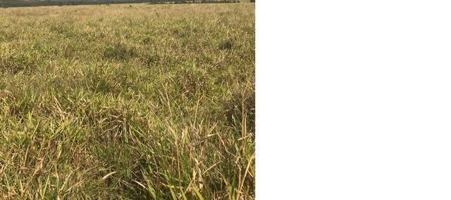 4800 hectares Pecuária e lavoura Região Nobres MT, Terras para plantio de Soja - Foto 3