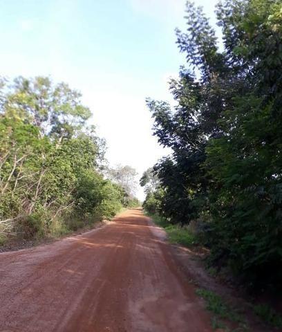 Fazenda com 150 hectares - Região da Soja (Balsas-MA) - Foto 4