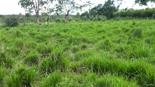 Fazenda com 150 hectares - Região da Soja (Balsas-MA) - Foto 6