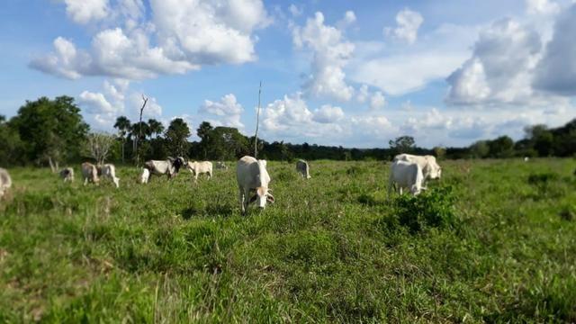 Fazenda com 150 hectares - Região da Soja (Balsas-MA)