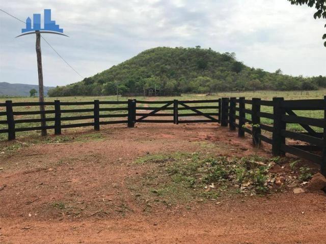 Fazenda 1850 has no município de Nobres-MT, na região de Bom Jardim; - Foto 18