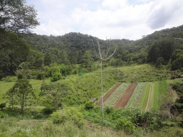 Sitio com 780.000 m² por R$ 1.150.000 - Ponte Nova - Teresópolis/RJ - Foto 2