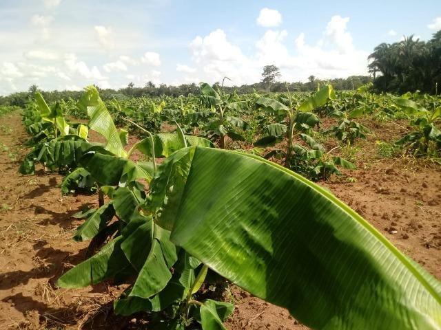 Fazenda com dupla aptidão em Rosário Oeste Mato Grosso - Foto 8