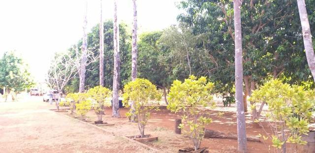 Fazenda 14alq Pronta Buritirana Palmas 1.2milh Ac Prop Airton - Foto 11
