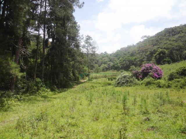 Sitio com 780.000 m² por R$ 1.150.000 - Ponte Nova - Teresópolis/RJ - Foto 8