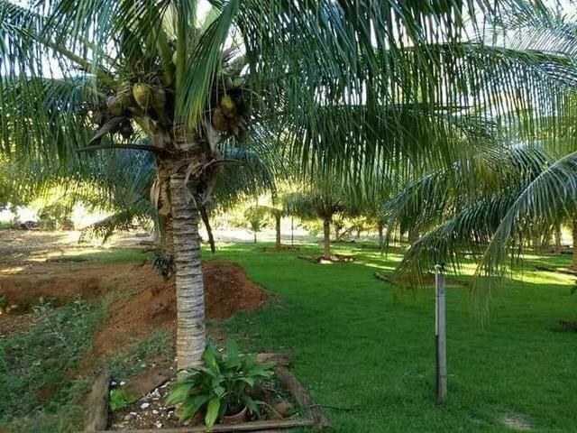 Fazenda 14alq Pronta Buritirana Palmas 1.2milh Ac Prop Airton - Foto 2