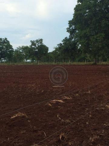 Fazenda 104 ha poconé mt - Foto 14