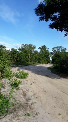 Fazenda com 150 hectares - Região da Soja (Balsas-MA) - Foto 3