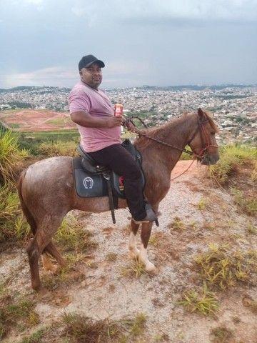 Cavalo marcha picada - Foto 5