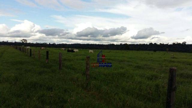 Fazenda Localizada na cidade de Buritis-RO - Foto 12
