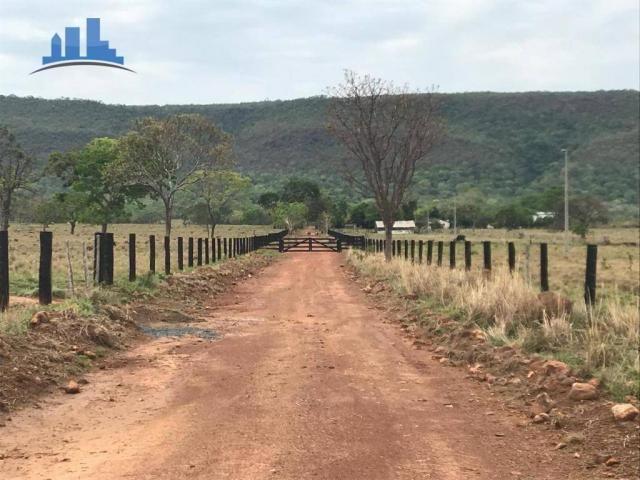 Fazenda 1850 has no município de Nobres-MT, na região de Bom Jardim; - Foto 15