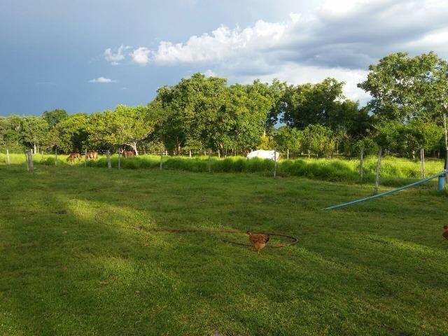 Sitio 120 hectares em Livramento - Foto 8
