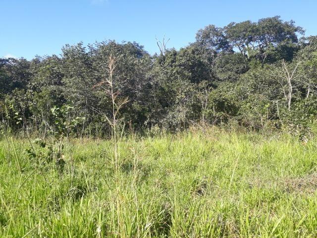 Fazenda com dupla aptidão em Rosário Oeste Mato Grosso - Foto 20