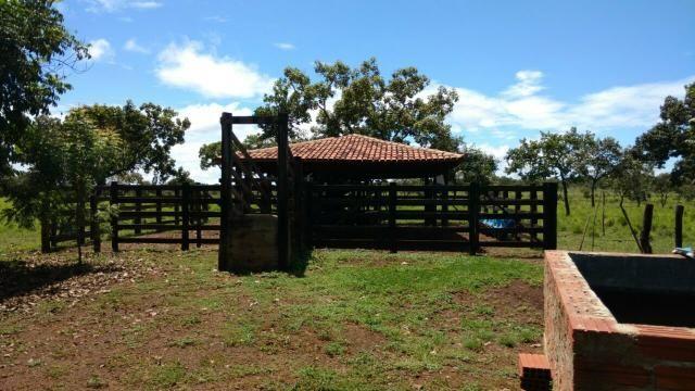 Fazenda 14alq Pronta Buritirana Palmas 1.2milh Ac Prop Airton - Foto 4