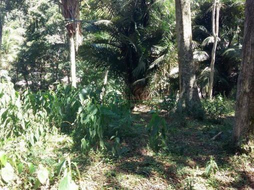 Terreno residencial à venda, Vargem Grande, Teresópolis. - Foto 4