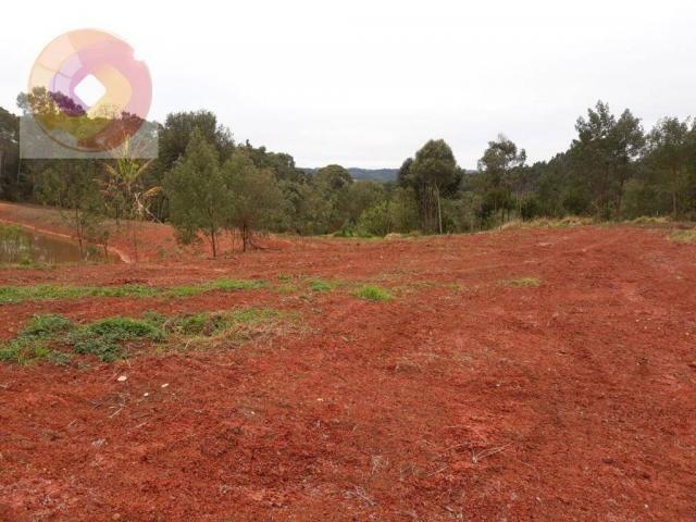 Chácara  à venda, 23000 m² por R$ 180.000 - Palmerinha - Campina Grande do Sul/PR