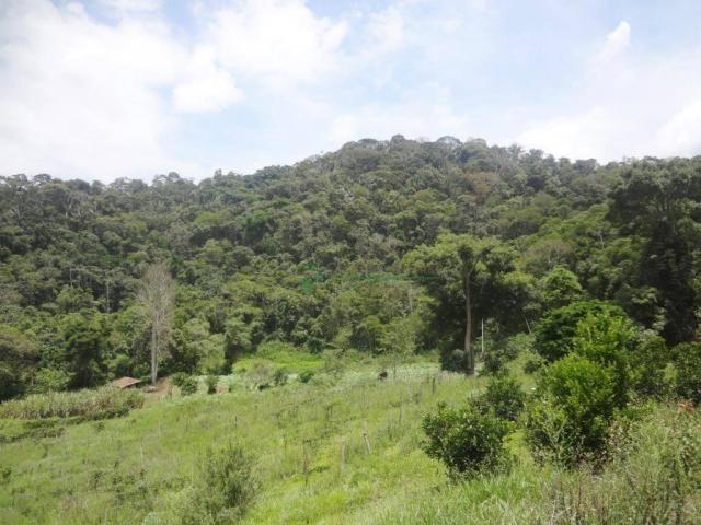 Sitio com 780.000 m² por R$ 1.150.000 - Ponte Nova - Teresópolis/RJ - Foto 14