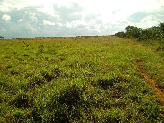 Fazenda com dupla aptidão em Rosário Oeste Mato Grosso - Foto 9