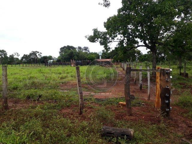 Fazenda 104 ha poconé mt - Foto 12