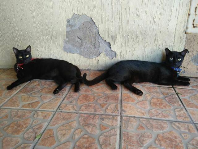 Doa-se casal de Gatos - Foto 2