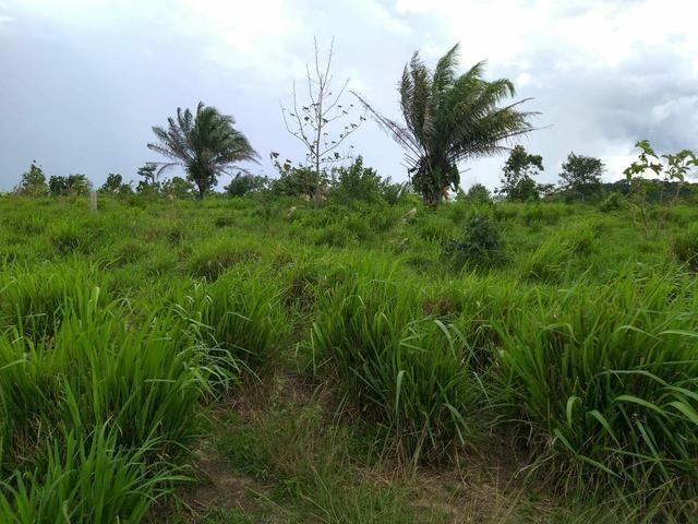 Fazenda em Parecis - RO. 4.000 hectares - Foto 3
