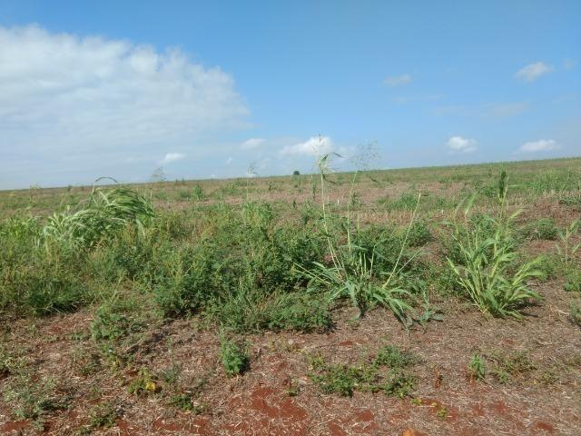 Alugo Fazenda p Arrendamento no Ms 1000 há - Foto 20