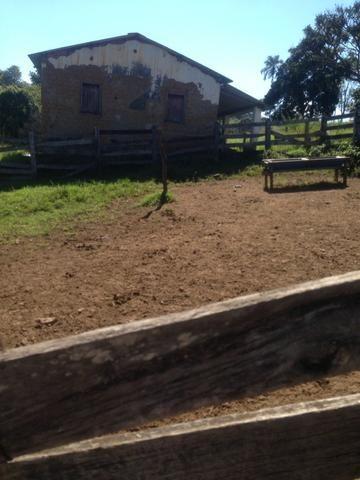 Fazenda caruru Valor R$ 1,400,000 - Foto 2