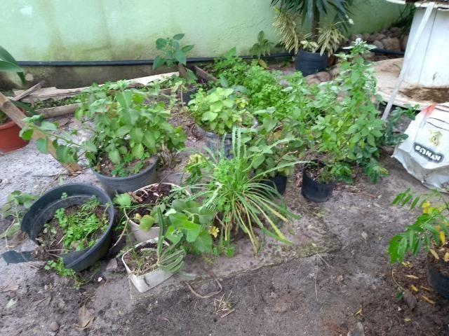 Mudas de Plantas e Hortaliças - Foto 6