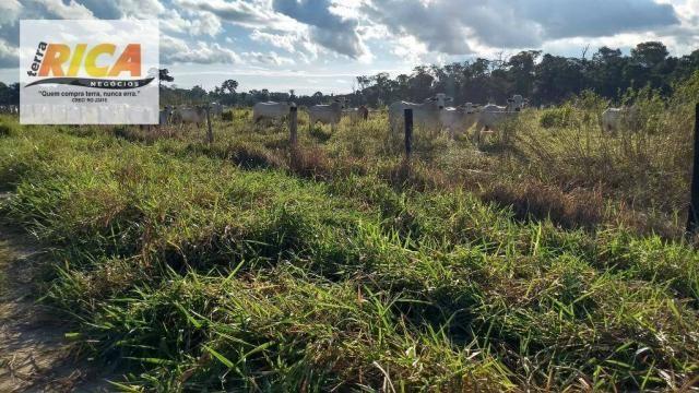 Fazenda com 140 Hectares em Candeias do Jamari/RO à venda, a 14 km da cidade - Foto 20