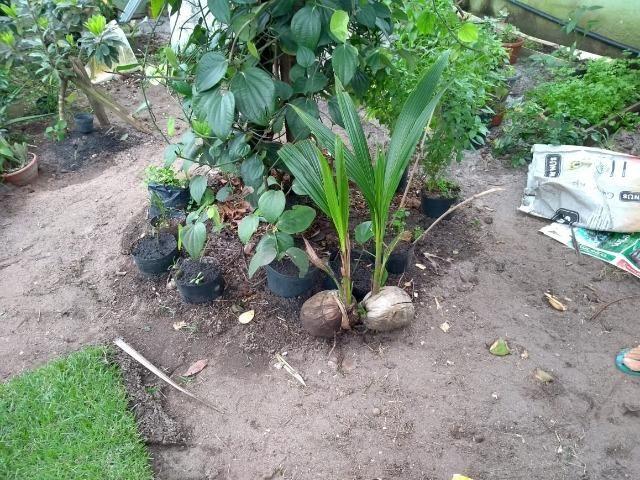 Mudas de Plantas e Hortaliças - Foto 3