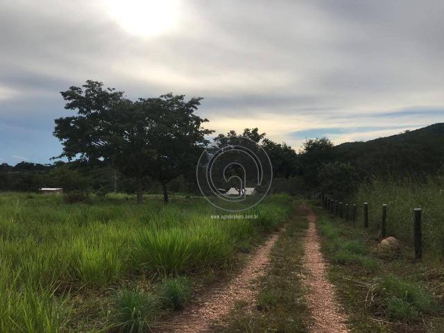 Sítio 11,8 ha na região distrito da guia - Foto 2