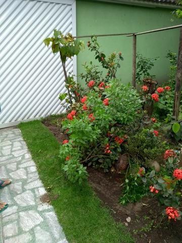Mudas de Plantas e Hortaliças - Foto 5